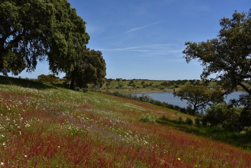 28-Spontane-Vegetation-Korkeiche-und-Staussee